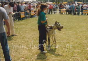 Tizard Z.Javisu CS Great Dane