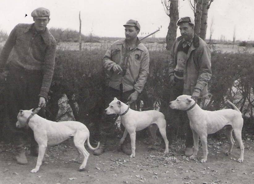 Men and their hunting Dogo Argentinos